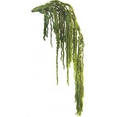Amaranthus prepariran, zelena mandelj, 40/70, 175 g