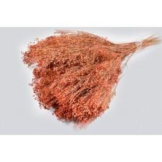 Broom bloom, antik roza, 100 g