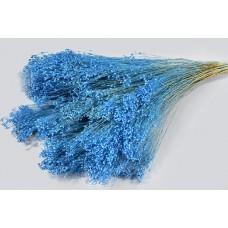 Broom bloom, modra, 100 g