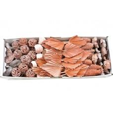 Eksote mešane vrste, oranž frost, 100 kosov