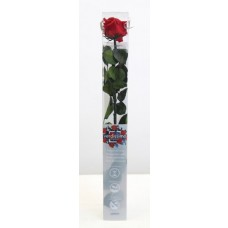 Vrtnica prep. STANDARD s steblom, rdeča, dolž. 55 cm