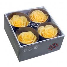 Vrtnice prep. PREMIUM, rumena, fi 6,5-8,5 cm, 4 kosi