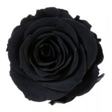 Vrtnice prep. ST, črna, 6 kosov