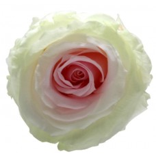 Vrtnice prep. ST TRICOLOR, zeleno / bela / roza, 6 kosov