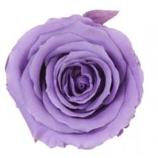 Vrtnice prep. ST, lila, 6 kosov