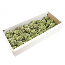 Plattyspernum x 1, zelen frosted, 50 kosov