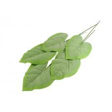 Hosta listi x 5, sivo zeleni, 40 cm, vez 5 kosov