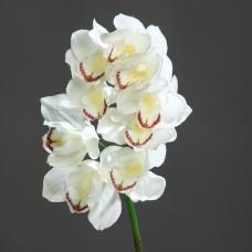 Orhideja Cymbidium 9 cvetov,  krem, 65 cm