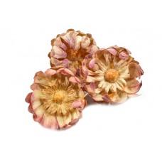 Protea sulphurea cvet, natur, 50 kosov