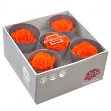 Vrtnice pr. Queen, oranžna, premer ca. 6,3 - 7,3 cm, 5 kosov
