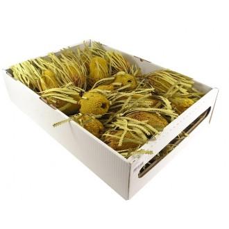 Banksia Hookerana, rumena, 30 kosov