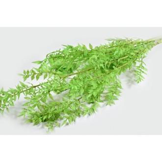 Ruscus, pistacija, 120 g