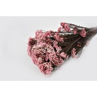 Rice flower, breskev pink, vez