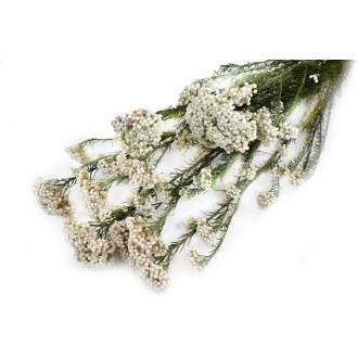 Rice flower, bela, 100 g