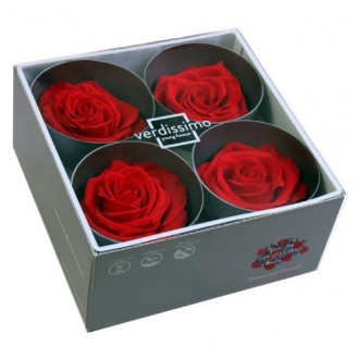 Vrtnice prep. PREMIUM, rdeča, fi 6,5-8,5 cm, 4 kosi