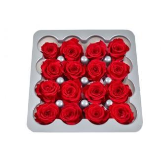 Vrtnice prep. PRINCESA, rdeča, fi 2-2,5 cm, 16 kosov