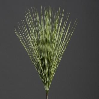 Trava Zebra, zeleno - krem, 50 cm